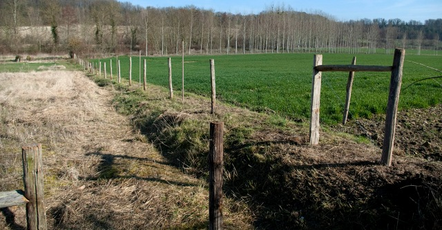 Fence line - March