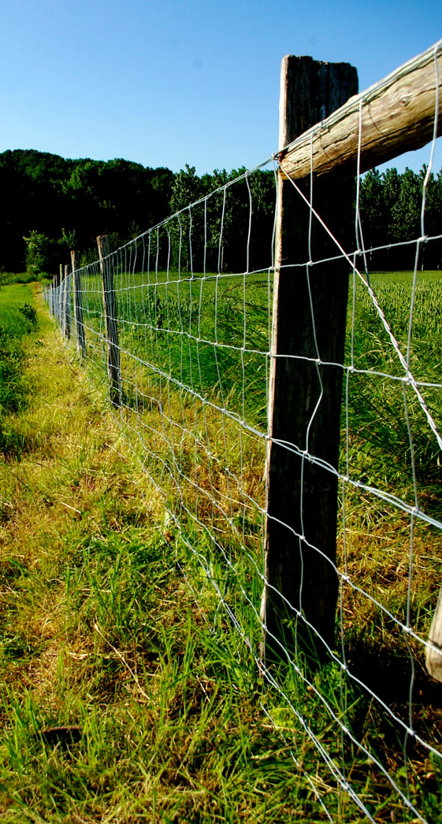 Fence line - May