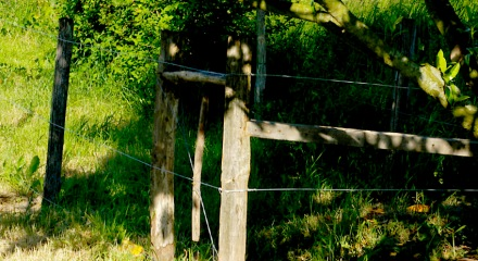 Fence showing straining wires